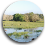 Pond Design Farm and Ranch