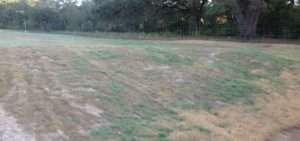 WEI Restoration Services -Grass Germination